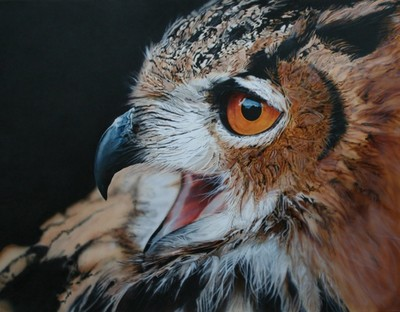 Owl (2007) - small